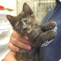 Adopt A Pet :: Snickers - Brooklyn, NY