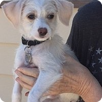 Adopt A Pet :: Turbo - Chandler, AZ