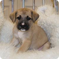 Adopt A Pet :: Kassidy 💖 DOB 4/23/17! - Saratoga Springs, NY