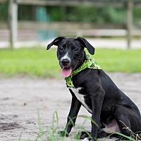 Adopt A Pet :: Jake - Tampa, FL