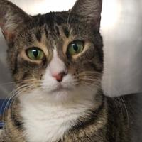 Adopt A Pet :: Nadya - Wellsville, NY