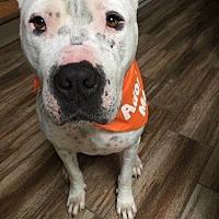 Adopt A Pet :: Tundra II - San Diego, CA