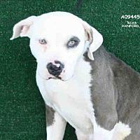 Adopt A Pet :: *THEA - Hanford, CA