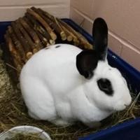 Adopt A Pet :: Bugsey - Moncton, NB