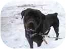 Rottweiler Dog for adoption in Miramichi, New Brunswick - Diesel