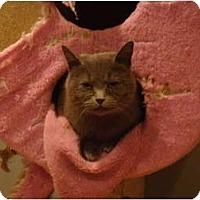 Adopt A Pet :: Nadia - Muncie, IN