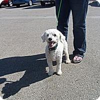 Adopt A Pet :: JUNE - Malibu, CA
