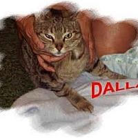 Adopt A Pet :: Dallas - Jacksonville, FL