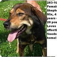 Adopt A Pet :: # 283-10 @ Animal Shelter - Zanesville, OH