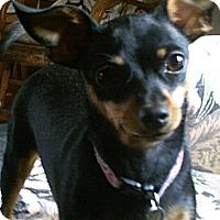 Adopt A Pet :: Suzi Adoption Pending - Victor, MT