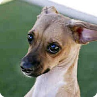 Adopt A Pet :: Oso - Agoura, CA