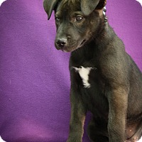 Adopt A Pet :: Abita - Broomfield, CO