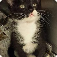 Adopt A Pet :: Nigel - Monroe, GA