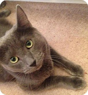 Domestic Shorthair Cat for adoption in Lisbon, Ohio - Thomas - ADOPTED!