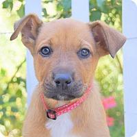 Adopt A Pet :: Minogue von Portia - Thousand Oaks, CA