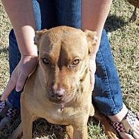 Adopt A Pet :: MARIGOLD 2 - Chandler, AZ