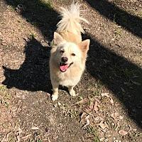 Adopt A Pet :: Brit - Baton Rouge, LA