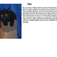Adopt A Pet :: Tala - Sterling Heights, MI