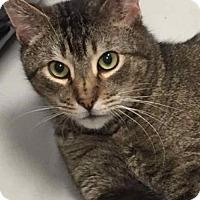 Adopt A Pet :: Sebastian (PS FH) - Trenton, NJ
