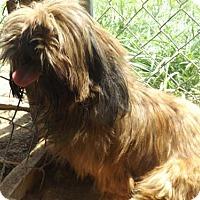Adopt A Pet :: Truffles - Zaleski, OH