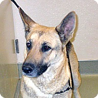 Adopt A Pet :: 353113 LF - Wildomar, CA