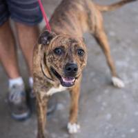 Adopt A Pet :: Cubby - Fresno CA, CA
