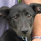 Adopt A Pet :: Phecda