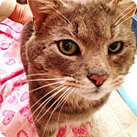 Adopt A Pet :: Diego - Xenia, OH
