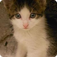 Adopt A Pet :: Noodles - Maywood, NJ