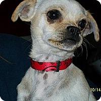 Adopt A Pet :: Ruby - Poway, CA