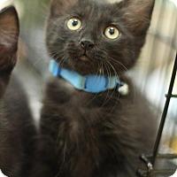 Adopt A Pet :: Huey - Sacramento, CA