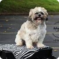 Adopt A Pet :: Poppy Harley - Shawnee Mission, KS