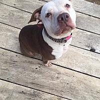 Adopt A Pet :: Muneca - Germantown, OH