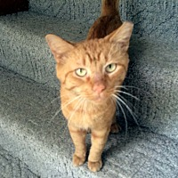 Adopt A Pet :: Youssef - Lombard, IL