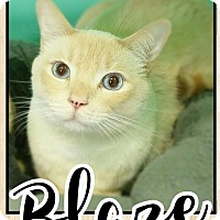 Adopt A Pet :: Blaze - Edwards AFB, CA