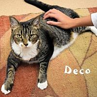 Adopt A Pet :: Decko - Sarasota, FL