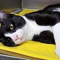 Adopt A Pet :: Oscar - Lago Vista, TX