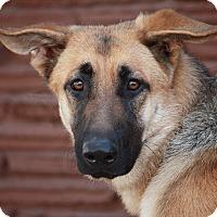 Adopt A Pet :: Zoey Von Zeitz - Los Angeles, CA