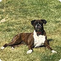 Adopt A Pet :: Pending Adoption - Brooke - Waterford, MI