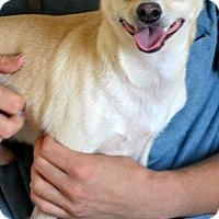 Adopt A Pet :: Buzzy - Okeechobee, FL