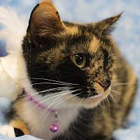 Adopt A Pet :: Tiffany - Addison, IL