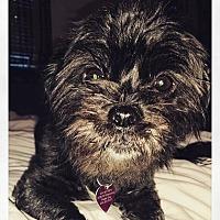 Adopt A Pet :: Maddie - West Allis, WI