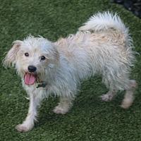 Adopt A Pet :: Jennings - Norwalk, CT
