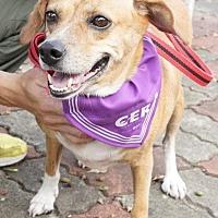 Adopt A Pet :: Dofi - Richmond, BC