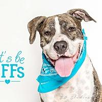 Adopt A Pet :: Harvey Sr. - Houston, TX