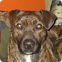 Adopt A Pet :: Tic - Hilham, TN