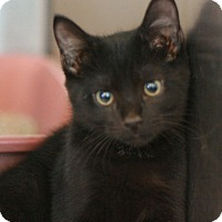 Adopt A Pet :: luther - Canoga Park, CA
