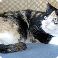Adopt A Pet :: Simone - Sunderland, ON