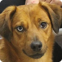 Adopt A Pet :: Dallas - North Olmsted, OH