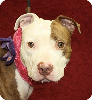 Pit Bull Terrier Mix Dog for adoption in Jackson, Michigan - Nettie